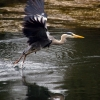 Heron 2/3