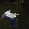 Heron 3/3
